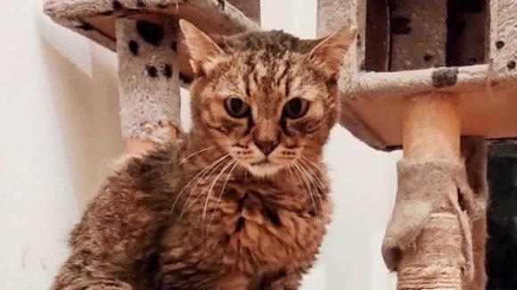 """Il gatto """"immortale"""" di Monza: l'incredibile età del felino"""