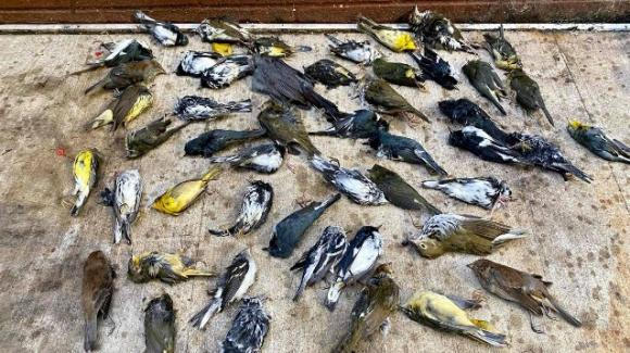 Philadelphia, piovono 1500 uccelli morti
