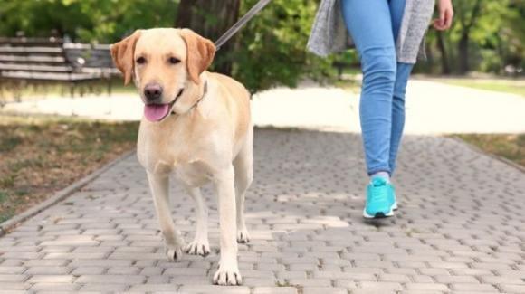 Portare a spasso il cane aumenta il rischio Covid del 78%