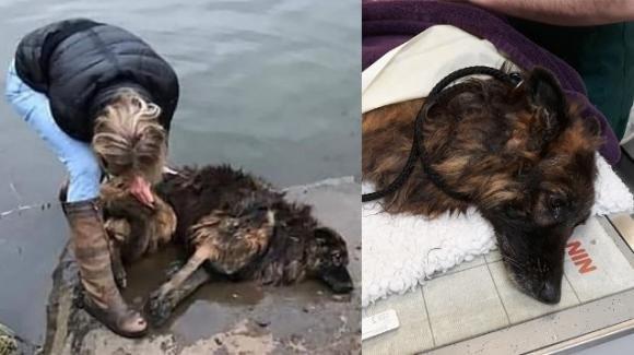 Lega il cane ad un masso e lo getta nel fiume, una sconosciuta si tuffa nelle acque e lo salva