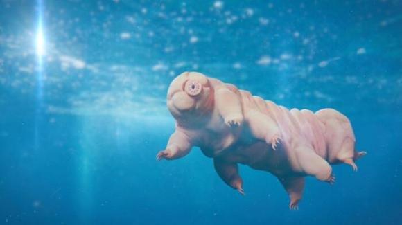 Qual è l'animale che riesce a sopravvivere di più? Scopriamo di chi si tratta