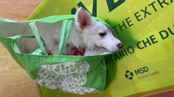 Addio Lallina, la cagnolina epilettica abbandonata in una busta della spesa