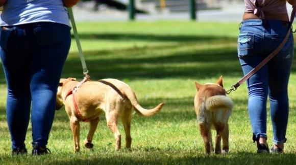 Firenze: i volontari di 2 associazioni portano a spasso i cani dei contagiati Covid e quelli di chi è in quarantena