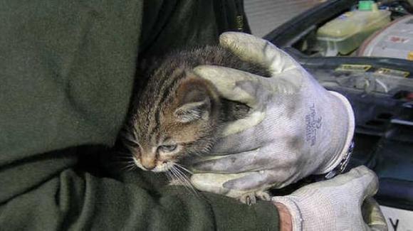 Orrore in provincia di Brindisi: 18enni picchiano un gatto e tentano di dargli fuoco, denunciati