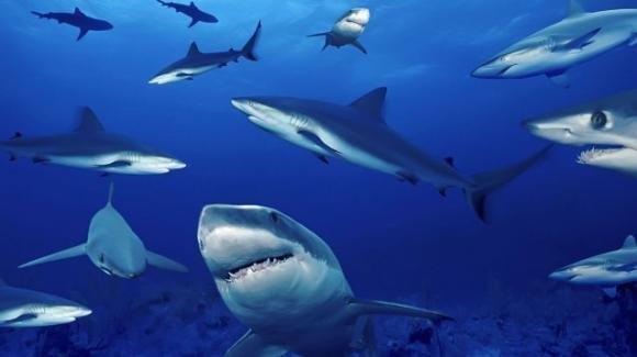 Gli squali: mostri mangia-uomini dalla pessima fama