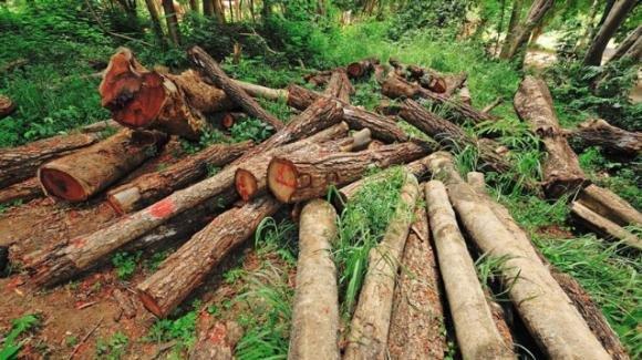 WWF, deforestazione: una minaccia per l'Australia