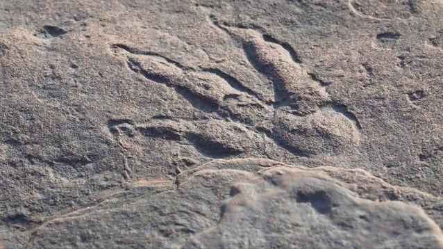 Gb: bimba di 4 anni scopre impronta dinosauro nel Galles