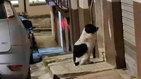 La storia del cane Willy di Ceglie Messapica che attende la sua amata sotto al balcone