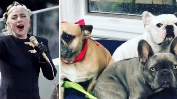 Sparano al dog sitter di lady Gaga e poi rubano due cani che aveva in custodia
