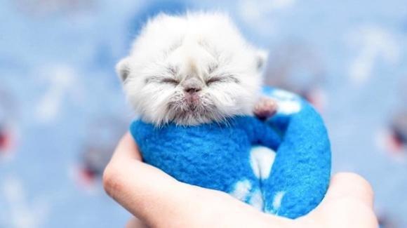 """La storia di """"Grandpa"""", il tenero gattino neonato che ha conquistato il mondo"""