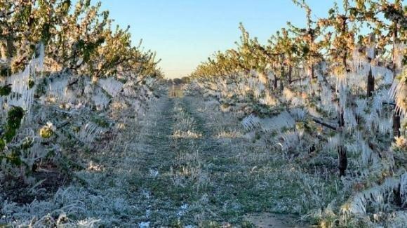 Meteo, le recenti gelate stanno danneggiando metà delle coltivazioni italiane