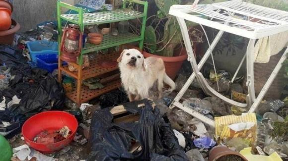 Cagnolino lasciato solo su un balcone pieno di rifiuti, senza acqua e cibo: salvato dalla Polizia Locale