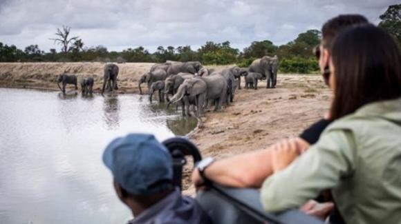 Sudafrica, bracconiere in fuga dai ranger muore schiacciato da un branco di elefanti