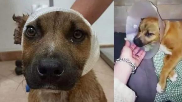 """Familiari dei bimbi che hanno tagliato le orecchie al cane: """"Volevano renderlo più bello"""""""