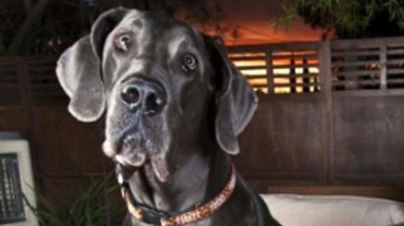 Viene aggredita dal cane di famiglia: bimba ricoverata in gravi condizioni