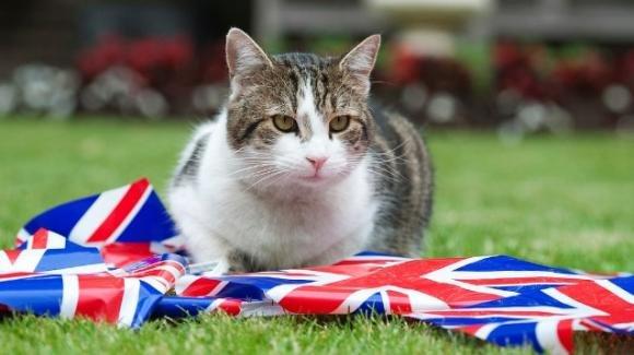 Regno Unito: 2 gatti domestici hanno contratto il Covid dai padroni