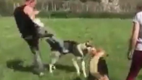 Toscana, addestratore cinofilo prende a calci un cane: le associazioni animaliste lo denunciano