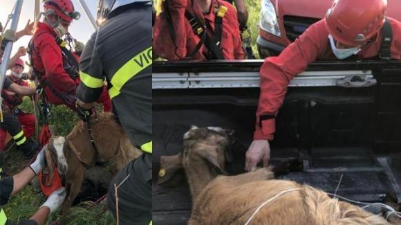 Capretta cade in un pozzo profondo 30 metri: salvata dai Vigili del Fuoco