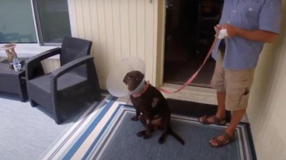 Florida: uomo salva il proprio cane dalle fauci di un alligatore