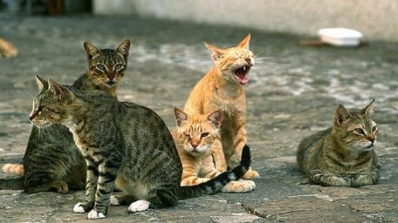 Venezia, appiccano un incendio alle casette di un gattile: arrestati