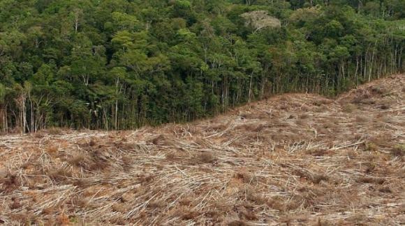 Nel Recovery Fund solo lo 0,8% destinato alle foreste