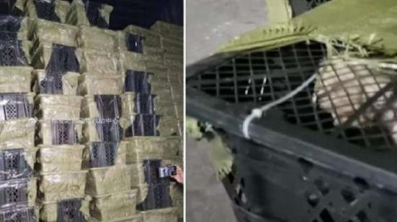 Cina: nelle Pet Mystery Box migliaia di animali morti