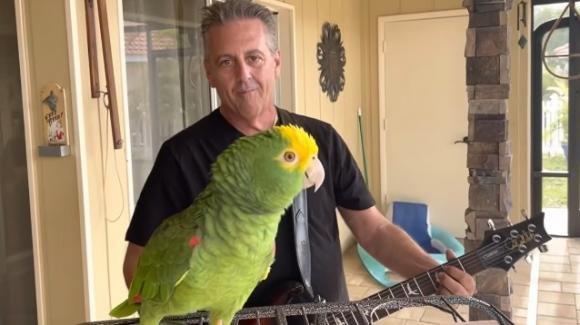 Florida, un pappagallo diventa star dei social cantando i classici del rock