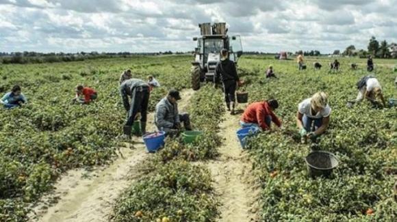 Bonus braccianti agricoli 2021: quando fare domanda all'Inps