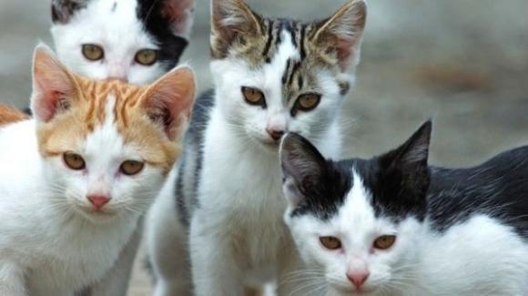 Brindisi, muore e lascia una colonia di 30 gatti: nessuno vuole adottarli