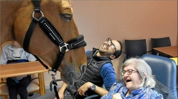 Dottor Peyo, ex star del dressage, ora luce degli occhi dei malati terminali di Calais