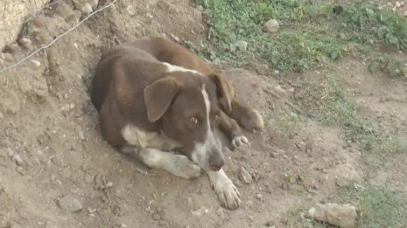 Messico: cane fedele continua ad aspettare il padrone davanti alla miniera dove è morto