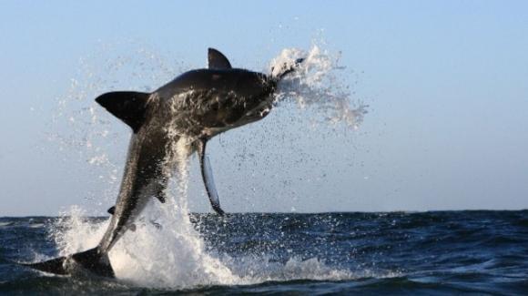 Giordania, squalo salta dall'acqua e stacca un pezzo di piede ad un turista