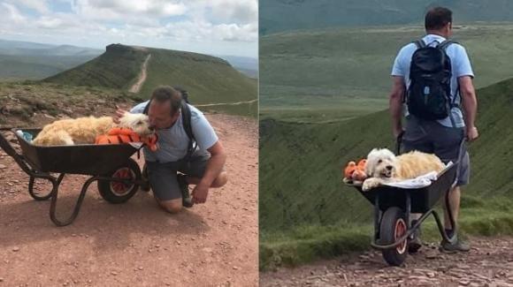 Il cane sta morendo: padrone lo porta a braccia sulle sue colline preferite