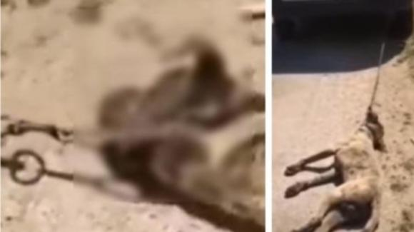 Trapani, uccide il cane del vicino e posta il video sui social