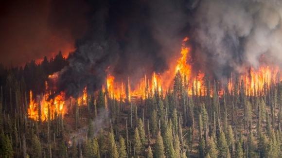 In tutto il mondo incendi devastanti provocano seri danni