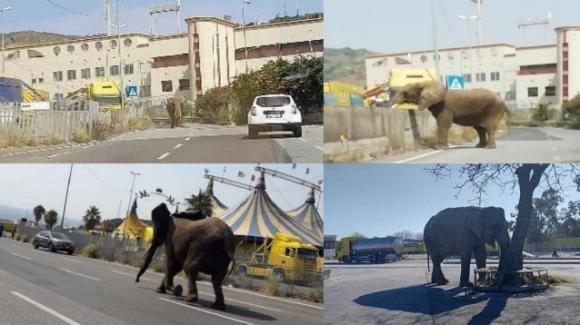 Messina, elefante si aggira solitario tra le vie della città: stupore degli abitanti