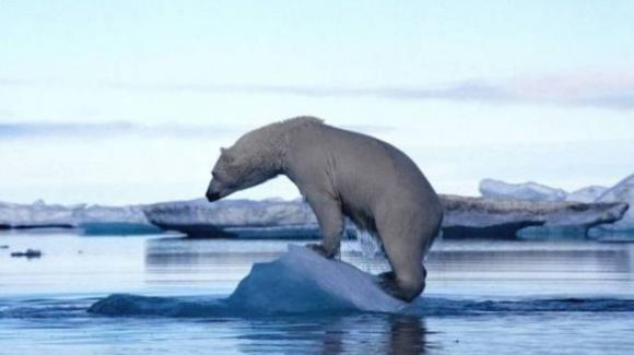 I cambiamenti climatici causano il rimpicciolimento delle specie animali