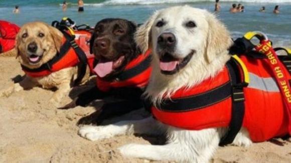 Sperlonga, tre cani bagnino salvano 14 persone bloccate in mare