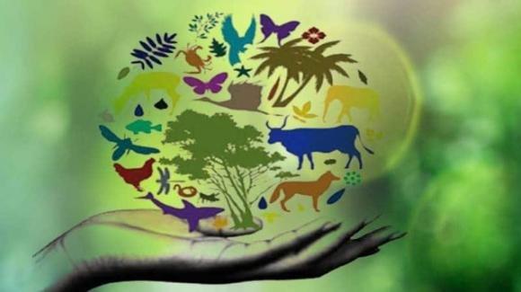 La crisi della biodiversità italiana, oltre il 50% delle specie in situazione critica