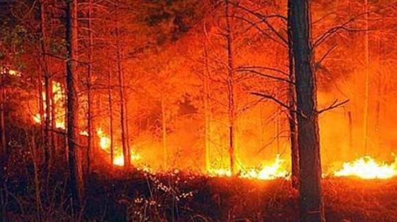 Calabria in fiamme: contestata l'apertura della caccia