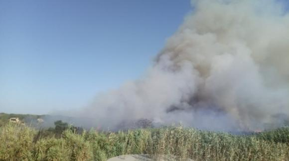 Brindisi, incendio sulla litoranea nord: a fuoco un vasto canneto