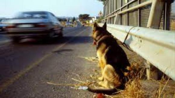 I consigli dell'Enpa per chi trova animali abbandonati sulla strada