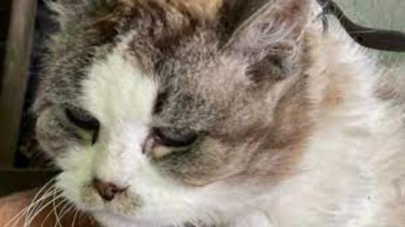 Morta la gattina Nina: ha vissuto incatenata per anni in una scatola