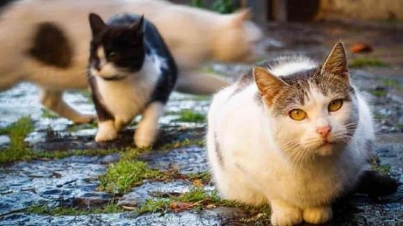 """Parma, da maggio sono scomparsi 50 gatti: """"Succede sempre di sera"""""""