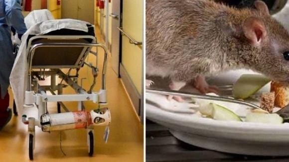 Policlinico di Modena: topo morto sul cibo destinato al reparto oncologico