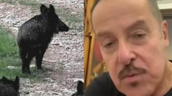 Massimo Lopez aggredito da un cinghiale sotto casa, l'affondo ai politici