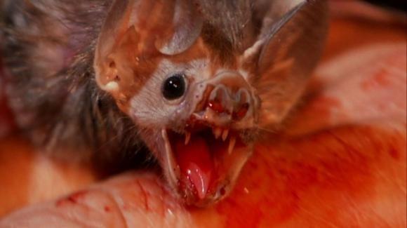 USA: muore di rabbia dopo un morso da un pipistrello: è il primo caso dal 1954