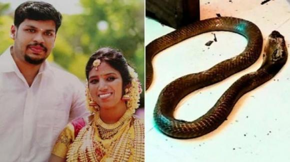 India: uccise la moglie nel sonno con un cobra, condannato a vita