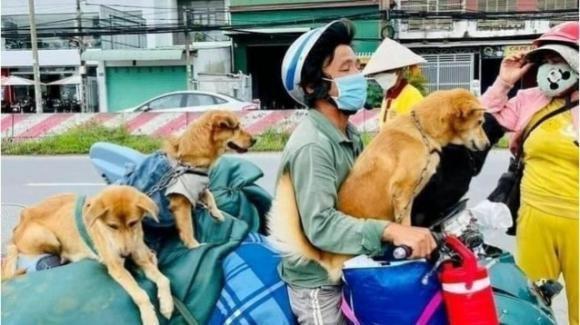Marito e moglie ricoverati per Covid: i loro 12 cani uccisi dalle autorità vietnamite per paura del virus