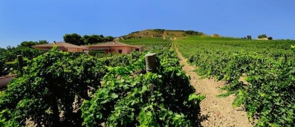 Cantine Rallo: artigiani del vino dal 1860